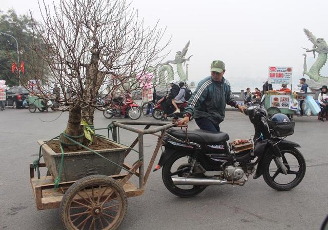 Người vận chuyển chạy sô, kiếm tiền triệu mỗi ngày nhờ chở cây cảnh - 1
