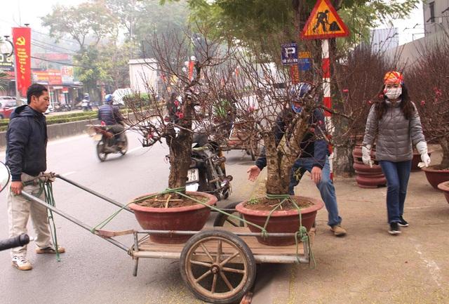 Người vận chuyển chạy sô, kiếm tiền triệu mỗi ngày nhờ chở cây cảnh - 3