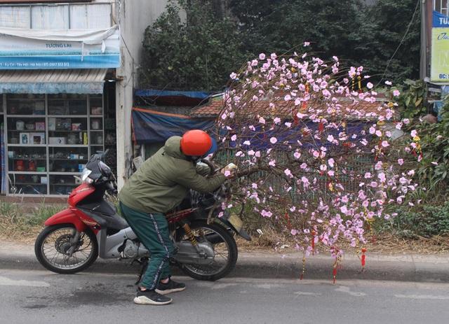 Người vận chuyển chạy sô, kiếm tiền triệu mỗi ngày nhờ chở cây cảnh - 4