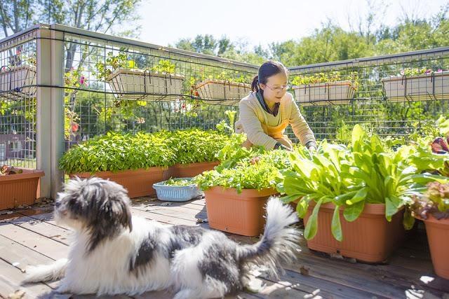 Người đàn ông xây nhà container tuyệt đẹp tặng vợ trồng rau, nuôi cá - 9