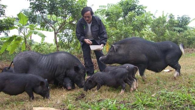 Sao Việt sở hữu biệt thự, cát- sê ngất ngưởng vẫn thích làm… nông dân - 7
