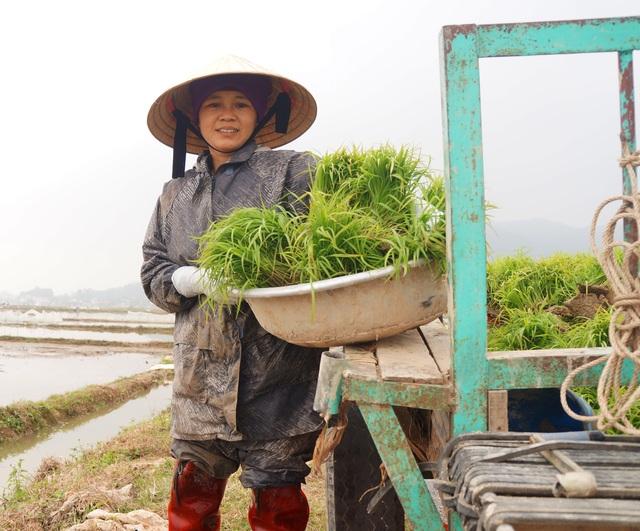 Giáp Tết, kiếm 300 nghìn đồng/ngày từ đi cấy lúa thuê - 3