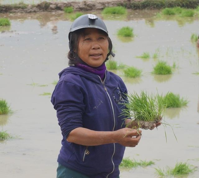 Giáp Tết, kiếm 300 nghìn đồng/ngày từ đi cấy lúa thuê - 7