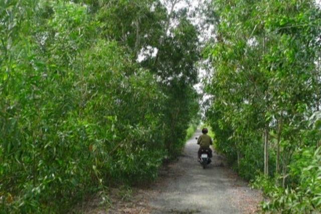 Xử phạt người giết nai rừng U Minh Hạ - 1