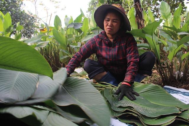 Hồ hởi thu hoạch ngọc xanh, dân Hà Nội kiếm tiền triệu mỗi ngày dịp Tết - 7