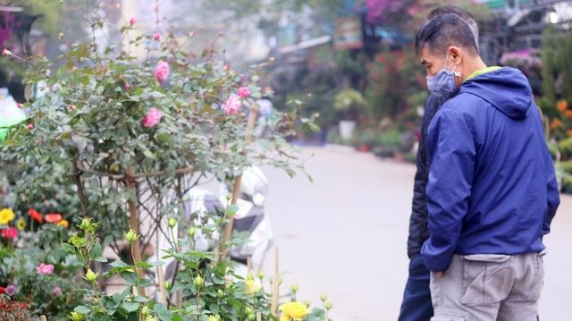 Những chậu hoa hồng giá rẻ hút người mua dịp cận Tết - 1