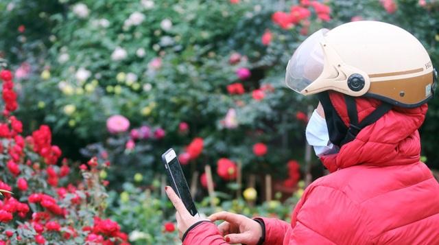 Những chậu hoa hồng giá rẻ hút người mua dịp cận Tết - 9