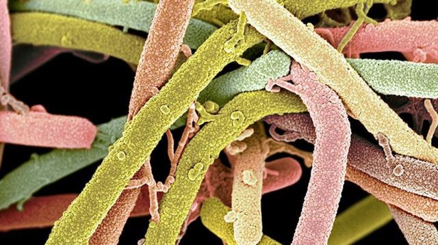 Vi khuẩn chết người có thể kháng thuốc kháng sinh nhanh hơn chúng ta tưởng - 1