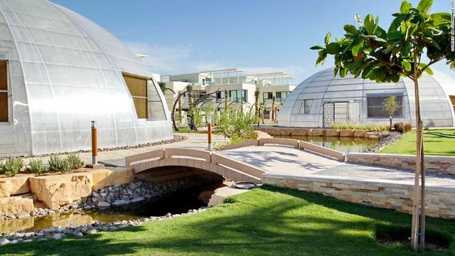 Cảnh trồng rau, nuôi gà trong thành phố xanh đầu tiên ở Dubai - 4