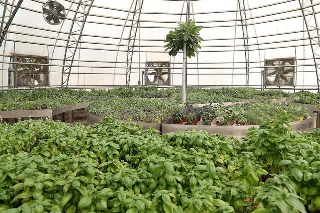Cảnh trồng rau, nuôi gà trong thành phố xanh đầu tiên ở Dubai - 7