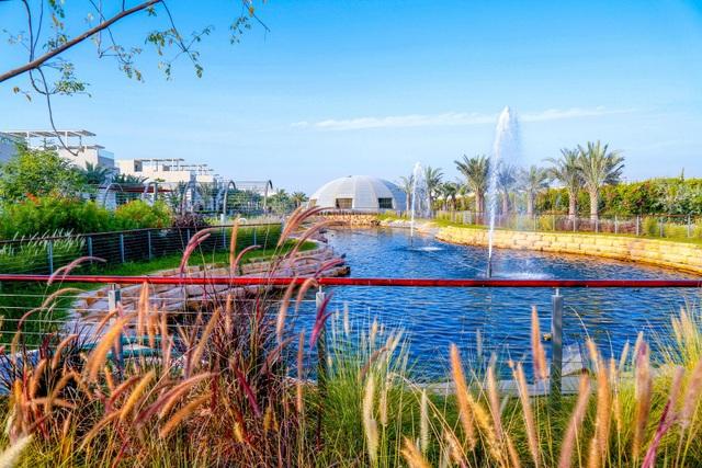 Cảnh trồng rau, nuôi gà trong thành phố xanh đầu tiên ở Dubai - 8