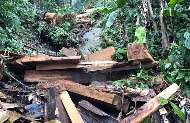 4 người rủ nhau lên rừng phòng hộ xẻ cây gỗ quý về làm nhà - 1