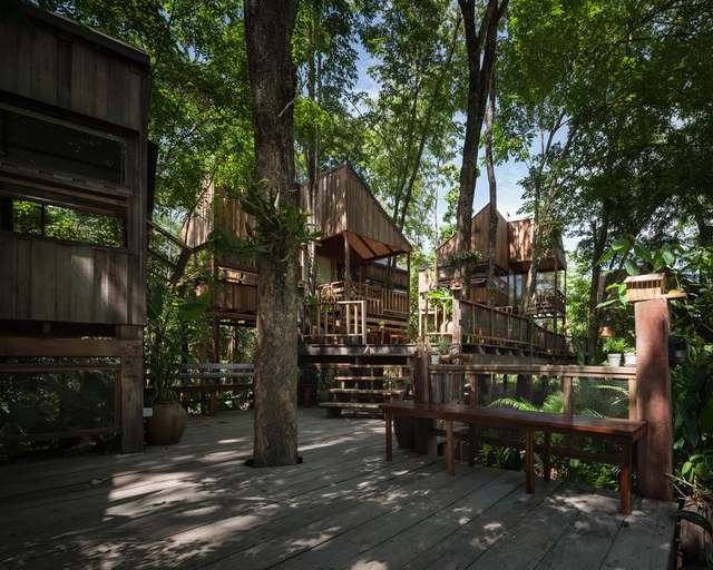 Gia đình chờ 30 năm để cây lớn thành rừng rồi mới xây nhà - 1