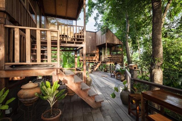 Gia đình chờ 30 năm để cây lớn thành rừng rồi mới xây nhà - 2