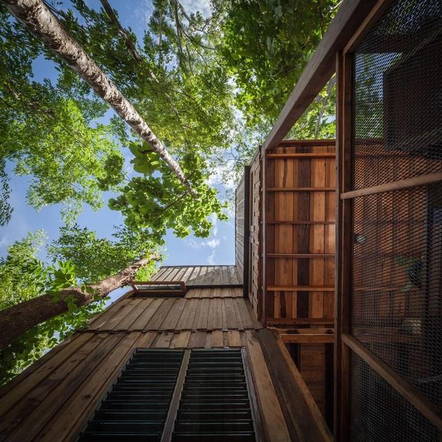 Gia đình chờ 30 năm để cây lớn thành rừng rồi mới xây nhà - 3