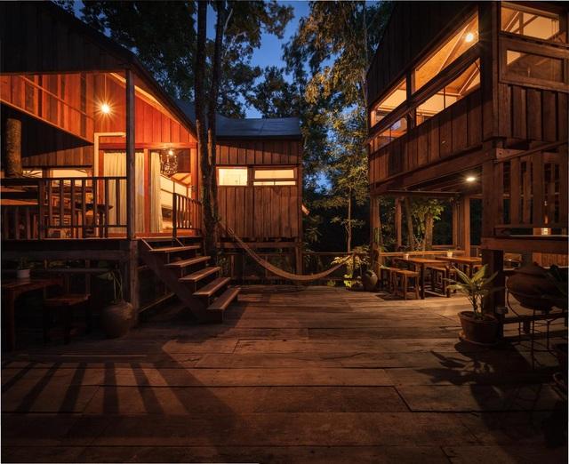 Gia đình chờ 30 năm để cây lớn thành rừng rồi mới xây nhà - 4