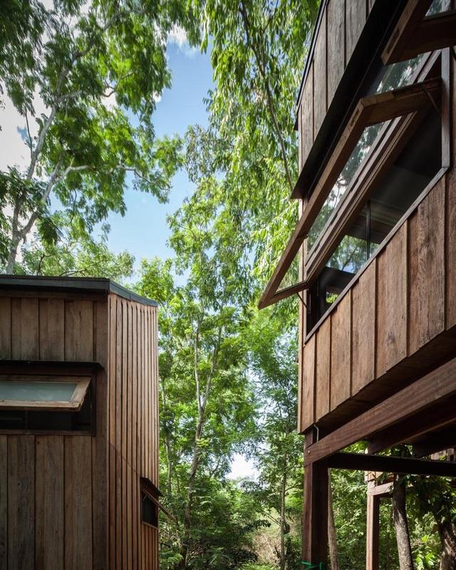 Gia đình chờ 30 năm để cây lớn thành rừng rồi mới xây nhà - 7