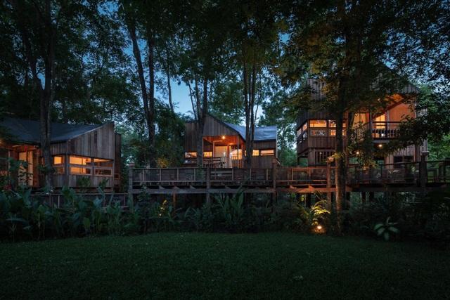 Gia đình chờ 30 năm để cây lớn thành rừng rồi mới xây nhà - 10