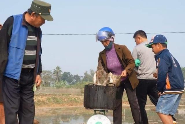 Giáp Tết, bội thu nhờ nuôi cá vụ 3 thay trồng lúa - 3