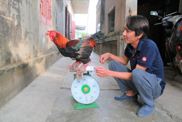 Giáp Tết, anh nông dân nuôi gà chân Voi đút túi trăm triệu đồng - 6