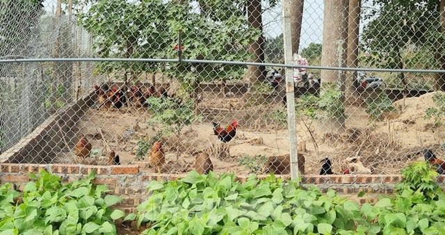 Biệt thự nuôi gà, trồng rau ngoại thành Hà Nội bất ngờ được thổi giá dựng ngược - 10