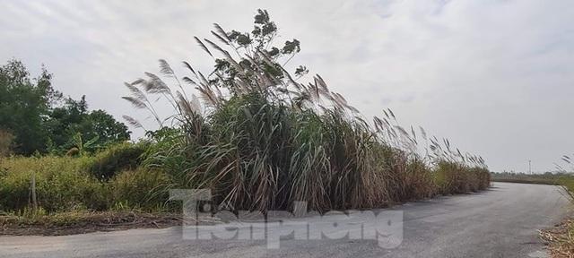 Biệt thự nuôi gà, trồng rau ngoại thành Hà Nội bất ngờ được thổi giá dựng ngược - 19