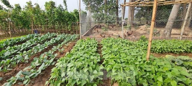 Biệt thự nuôi gà, trồng rau ngoại thành Hà Nội bất ngờ được thổi giá dựng ngược - 8