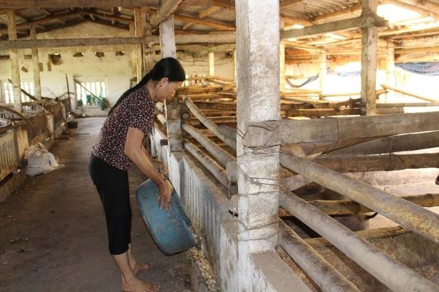 Cuối năm, người nuôi lợn rừng, chim trĩ ở Nam Định đắt khách - 2