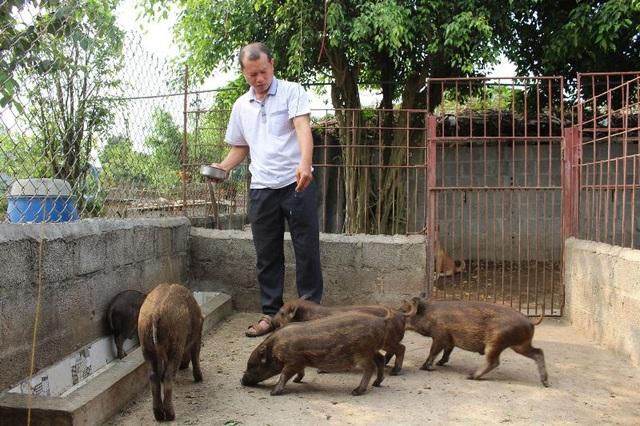 Cuối năm, người nuôi lợn rừng, chim trĩ ở Nam Định đắt khách - 3