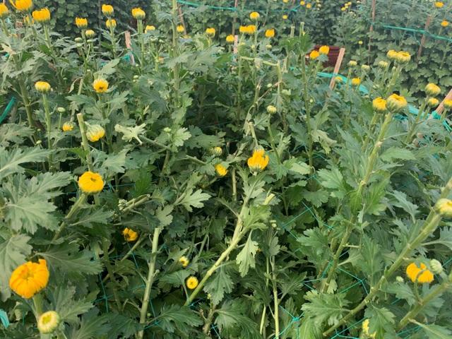 Kẻ xấu đập phá gần 400 chậu hoa Tết, nông dân khóc đứng khóc ngồi - 1