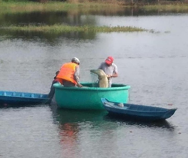 Bắt được cá sấu dài 2m trong hồ nước sát khu dân cư ở TP Vũng Tàu - 1