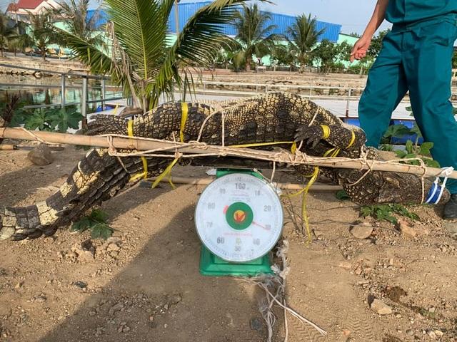 Bắt được cá sấu dài 2m trong hồ nước sát khu dân cư ở TP Vũng Tàu - 2