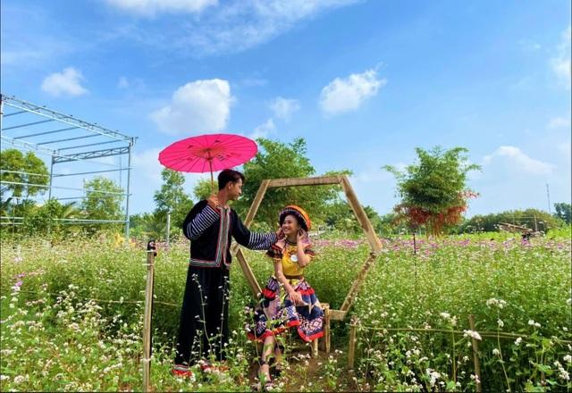 Chiêm ngưỡng vườn hoa tam giác mạch giữa đất Tây Đô - 6