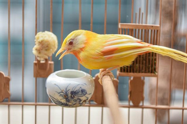 Tay cầm tiền tỷ, đại gia cũng không mua nổi chim ngũ sắc độc nhất Việt Nam - 2