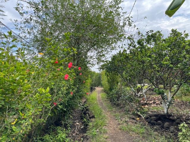 Săn đất làm nhà vườn, lãi cả tỷ bạc nhờ chiêu đơn giản - 2