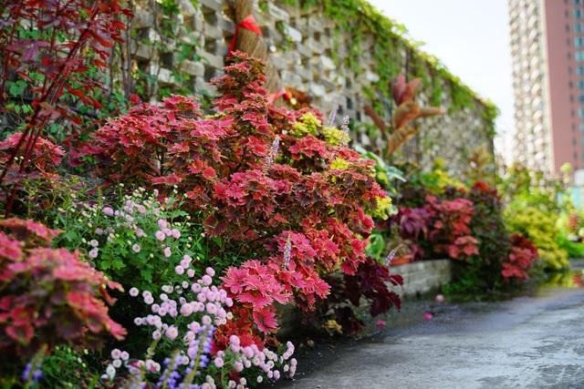 Rủ rê khắp mạng xã hội, anh chàng cùng nhóm bạn tạo vườn hoa giữa trời - 5