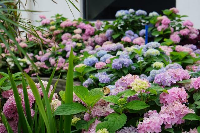 Rủ rê khắp mạng xã hội, anh chàng cùng nhóm bạn tạo vườn hoa giữa trời - 6