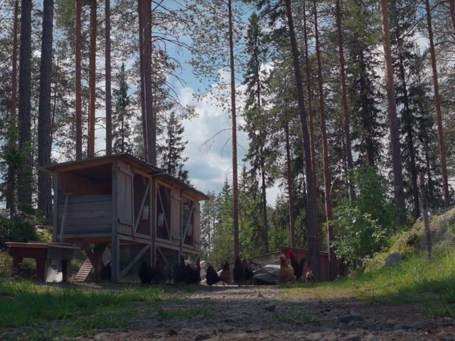 Cuộc sống không điện, nước của gia đình 8 năm ở ẩn trong rừng - 6