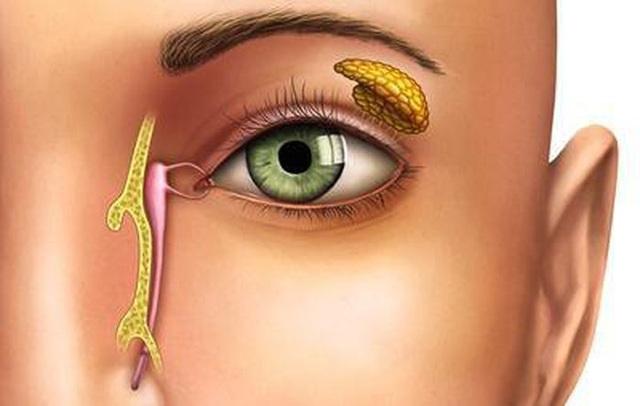 Thường xuyên xuất hiện gỉ mắt, có thể gan đang cần nghỉ ngơi - 1