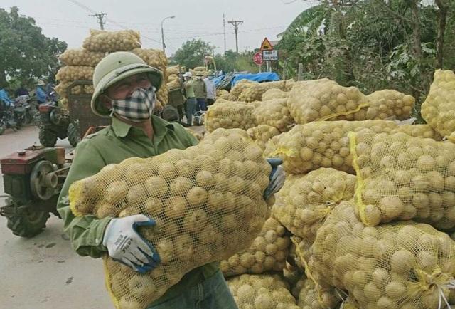 Quảng Ninh giải cứu khoai tây cho người dân khu vực bị phong tỏa - 1