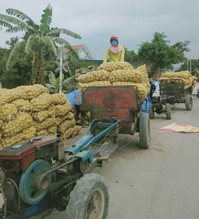 Quảng Ninh giải cứu khoai tây cho người dân khu vực bị phong tỏa - 2