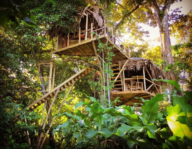 Ngôi nhà độc, lạ lơ lửng giữa rừng cây, mỗi buổi sáng chim hót líu lo - 1