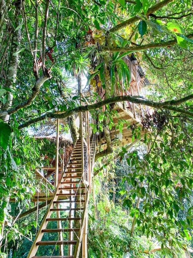 Ngôi nhà độc, lạ lơ lửng giữa rừng cây, mỗi buổi sáng chim hót líu lo - 3