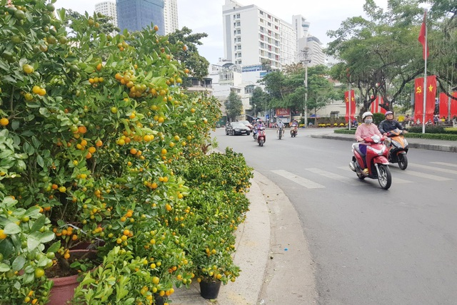 Nha Trang tourist street is filled with spring colors to welcome the New Year of the Ox - 1