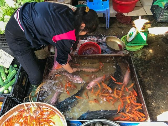 Tiểu thương bán cá chép ở TPHCM than trời vì dịch Covid-19 - 3
