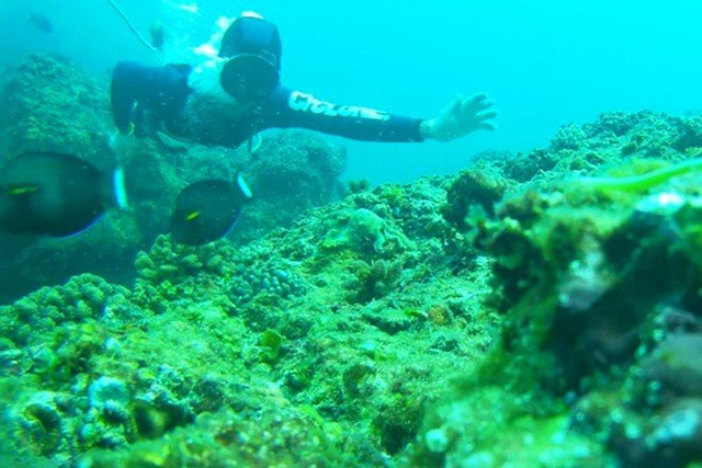 Quảng Ngãi: Nghề lặn biển tìm cá độc đắt hàng dịp Tết - 2