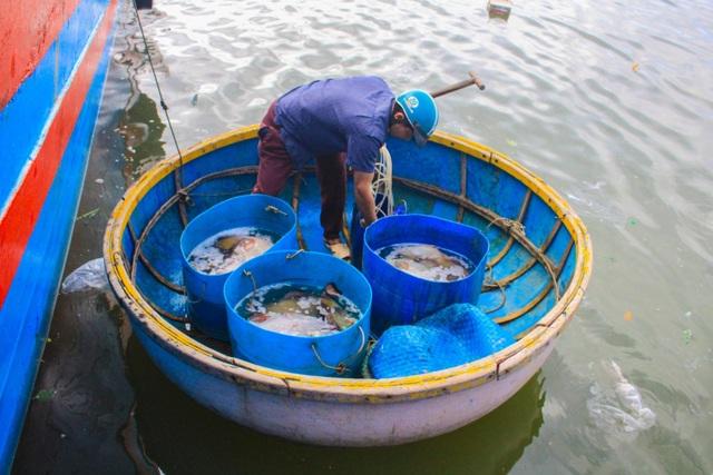 Quảng Ngãi: Nghề lặn biển tìm cá độc đắt hàng dịp Tết - 3