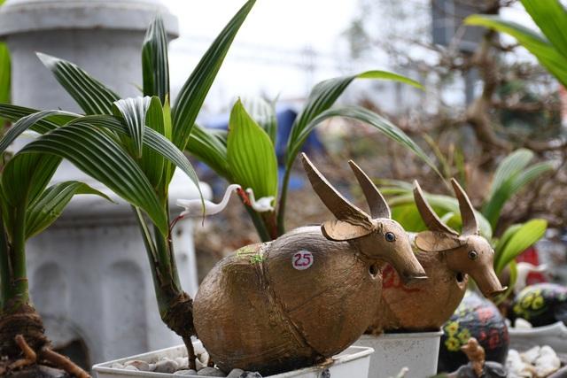 Độc đáo bonsai dừa hình trâu thu hút khách Tết Tân Sửu - 6