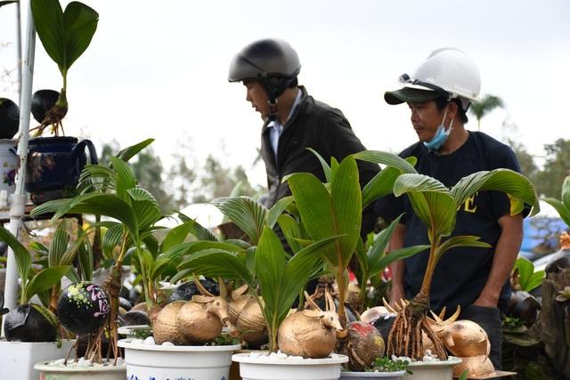 Độc đáo bonsai dừa hình trâu thu hút khách Tết Tân Sửu - 4