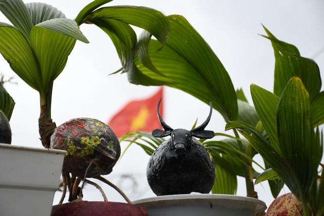 Độc đáo bonsai dừa hình trâu thu hút khách Tết Tân Sửu - 3